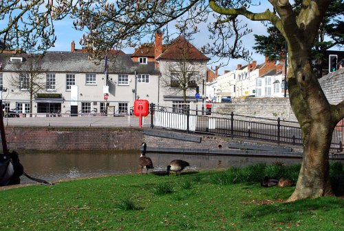 Geese next to the start of the Stratford upon Avon Canal
