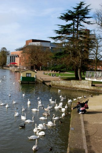 Feeding the swans on the River Avon